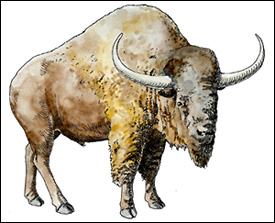 Artist rendering of an Ice Age Bison Bison antiquus).