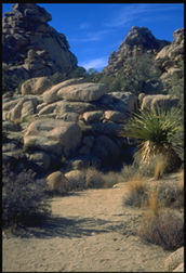 [Joshua Tree National Park.]
