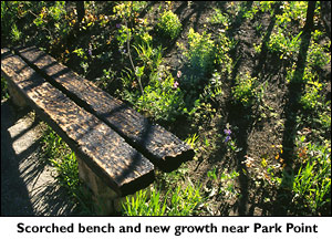 Scorched bench and new growth in Mesa Verde.