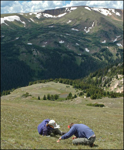 Scientists study the effects of nitrogen pollution from power plants, autos and agriculture on alpine vegetation in Rocky Mountain NP