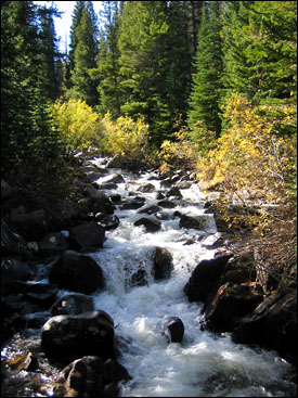 A fast-moving creek along the Lost Lake Trail near Hessie, Colorado